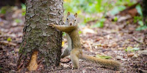 tree hugger squirrel - forest management