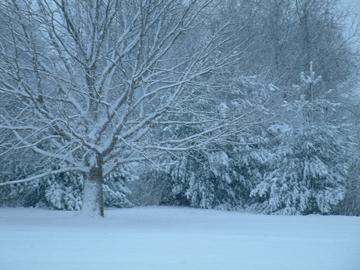 Winter Scene AC Rouge