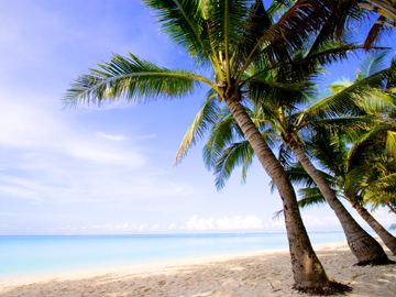 Beach Scene AC Rouge
