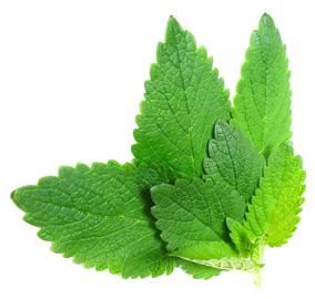 start fresh mint