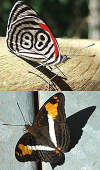 Iguazu Falls Argentina Park Butterflies