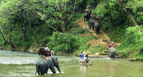 Elephant Trekking in the Jungle of northern Thailand