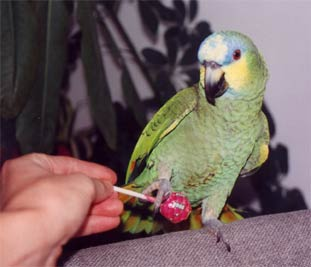 Coco and Chupa Chups Lollipops