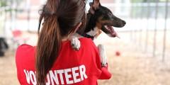 volunteer animal shelter humane dog