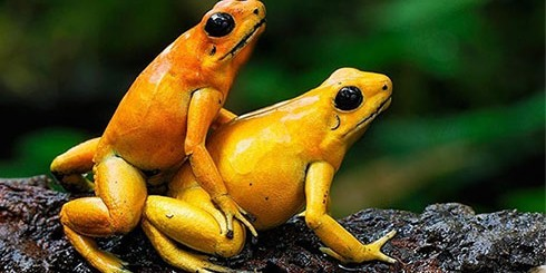 sex-frogs