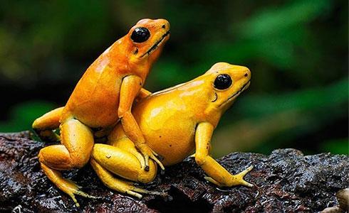 sex-frogs