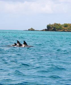 Tobago Dolphins