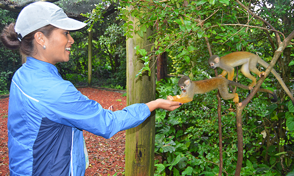 Monkey Jungle - Miami - Feeding Squirrel Monkeys