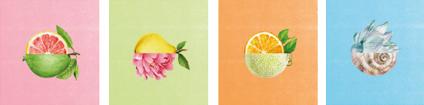 Fruit & Passion