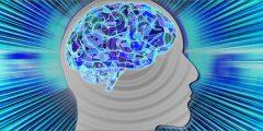 human mind brain