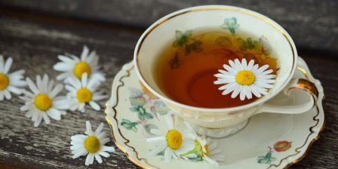 daisy herbal tea