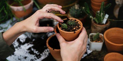 pot in your garden
