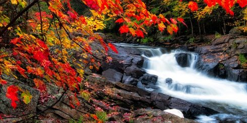 fall in Ontario Algonquin park