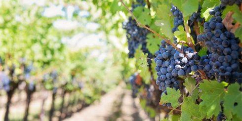 Vineyards Wine Travel Wine Lovers